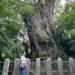 【大分】樹齢3000年の大楠と地元人気ケーキと行列パン